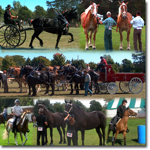 collage2_horse_shows