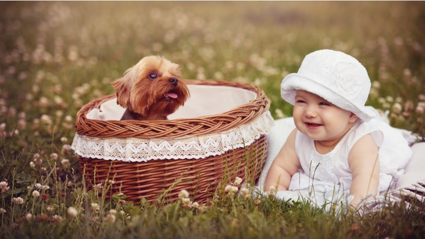 cute girl and basket puppy-852x480