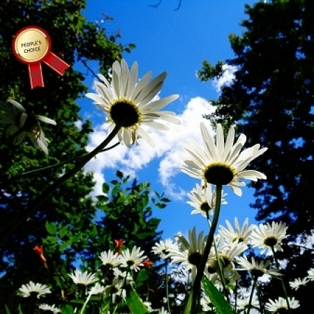 """""""Blue Sky and Daisies"""" - Waterloo Park"""